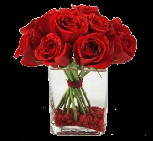 rosa vidro