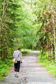 caminhada-da-tarde-na-floresta-thumb21141997