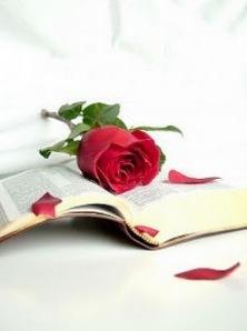rosa-sobre-a-biblia_2214519