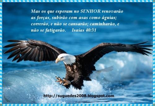 aguia de deus blog
