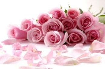 blog-rosas1