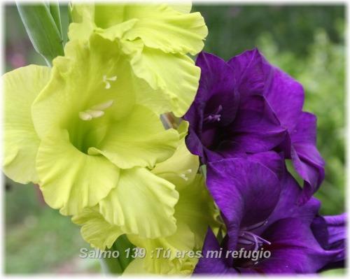 Salmo139Teresmirefugio