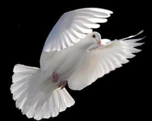 -Pombo-Branco-espirito