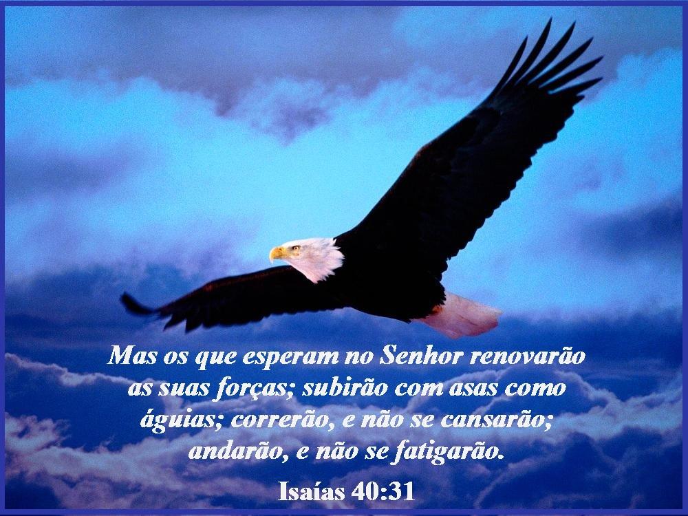 Resultado de imagem para Cansam-se as crianças e param, os jovens tropeçam e caem, 31 mas os que esperam no Senhor renovam suas forças, criam asas como as águias, correm sem se cansar, caminham sem parar.