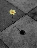 flor calçada