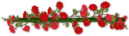 barra flores images