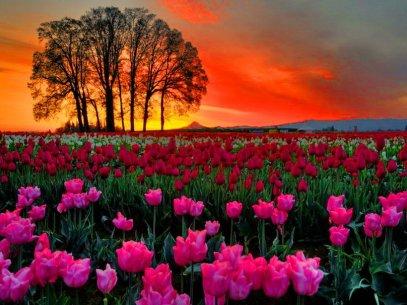 Resultado de imagem para amanhecer no jardim