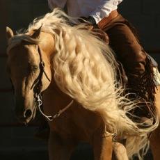 cavalo whizmo_web