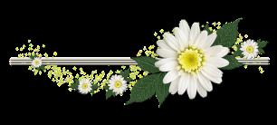 barra margarida Flowerswirl